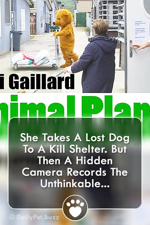 She Takes A Lost Dog To A Kill Shelter. But Then A Hidden Camera Records The Unthinkable...