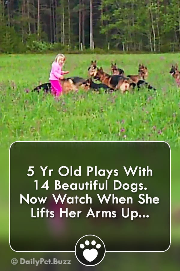 5 Yr Old Plays With 14 Beautiful Dogs. Now Watch When She Lifts Her Arms Up...