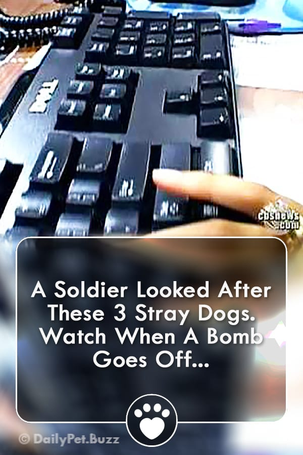 A Soldier Looked After These 3 Stray Dogs. Watch When A Bomb Goes Off...
