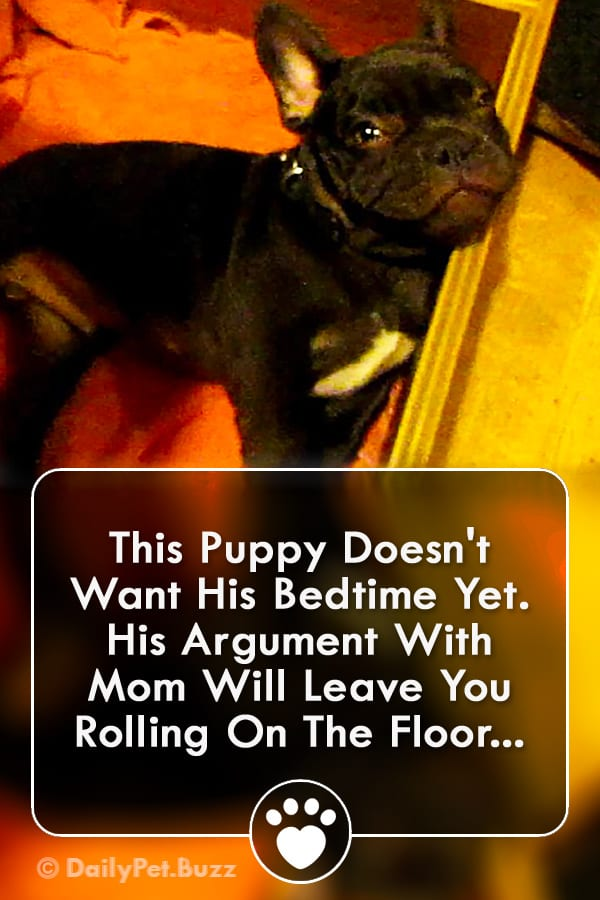 This Puppy Doesn\'t Want His Bedtime Yet. His Argument With Mom Will Leave You Rolling On The Floor...