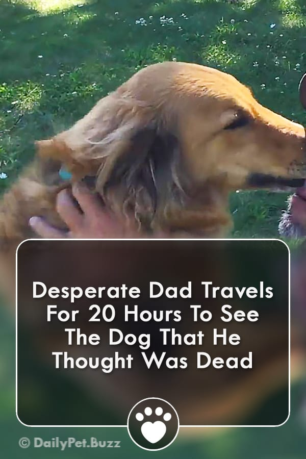 Desperate Dad Travels For 20 Hours To See The Dog That He Thought Was Dead