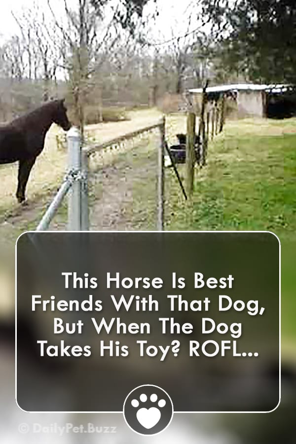This Horse Is Best Friends With That Dog, But When The Dog Takes His Toy? ROFL...