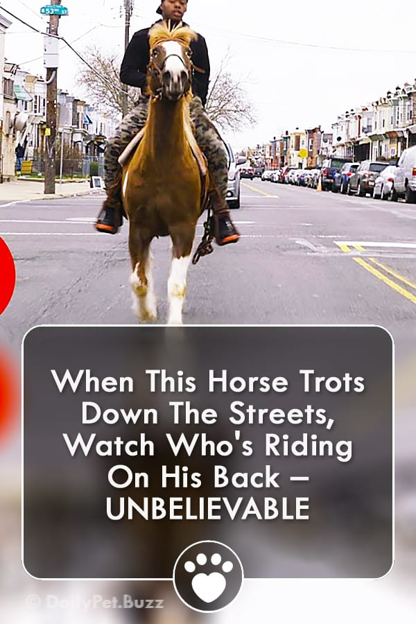 When This Horse Trots Down The Streets, Watch Who\'s Riding On His Back – UNBELIEVABLE