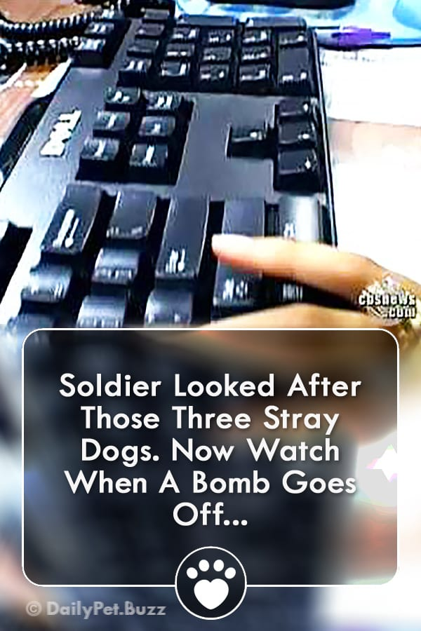 Soldier Looked After Those Three Stray Dogs. Now Watch When A Bomb Goes Off...