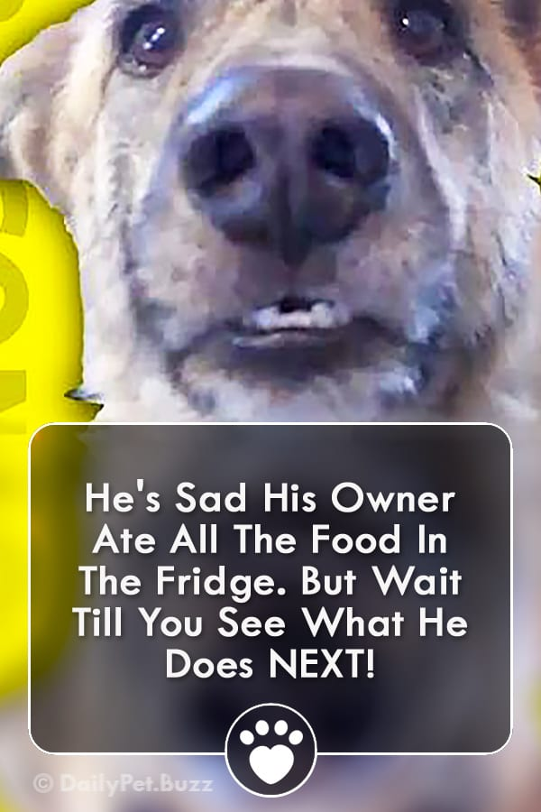 He\'s Sad His Owner Ate All The Food In The Fridge. But Wait Till You See What He Does NEXT!