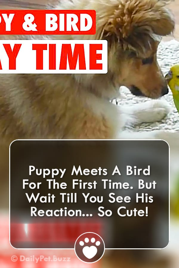 Puppy Meets A Bird For The First Time. But Wait Till You See His Reaction... So Cute!