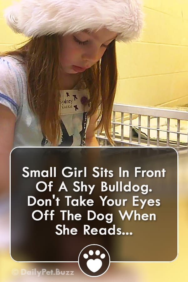 Small Girl Sits In Front Of A Shy Bulldog. Don\'t Take Your Eyes Off The Dog When She Reads...