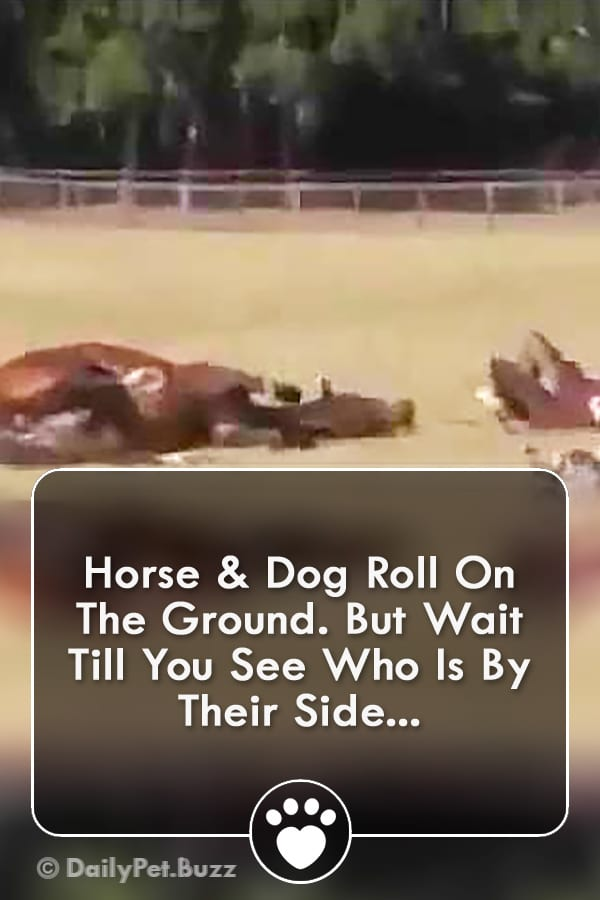 Horse & Dog Roll On The Ground. But Wait Till You See Who Is By Their Side...