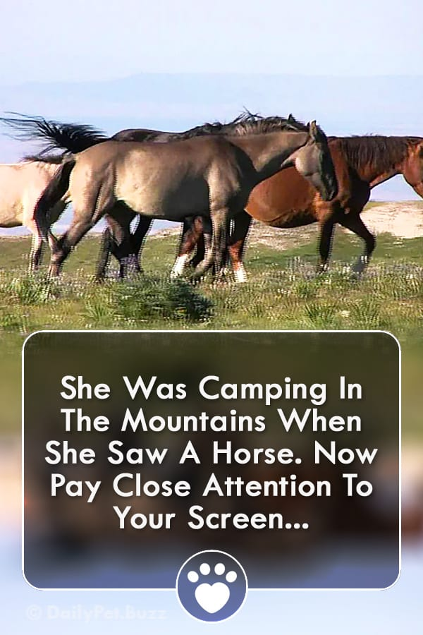 She Was Camping In The Mountains When She Saw A Horse. Now Pay Close Attention To Your Screen...