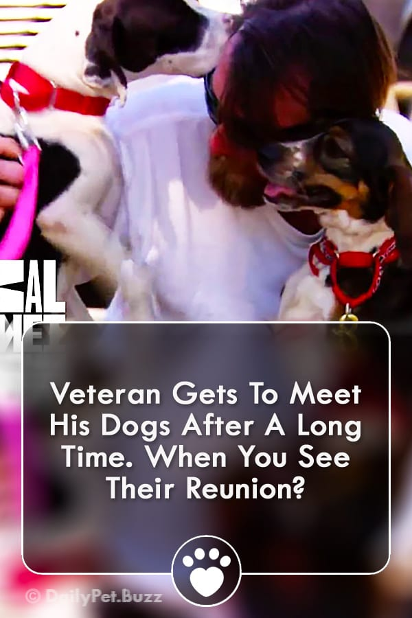 Veteran Gets To Meet His Dogs After A Long Time. When You See Their Reunion?