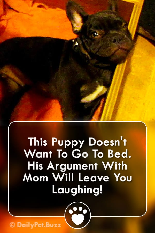 This Puppy Doesn\'t Want To Go To Bed. His Argument With Mom Will Leave You Laughing!