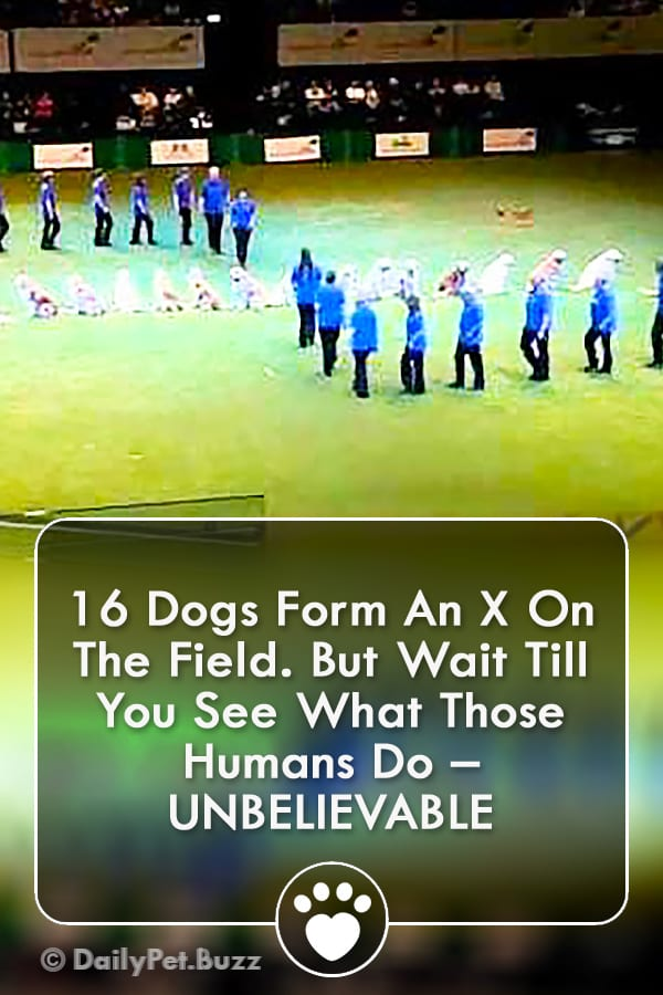 16 Dogs Form An X On The Field. But Wait Till You See What Those Humans Do – UNBELIEVABLE