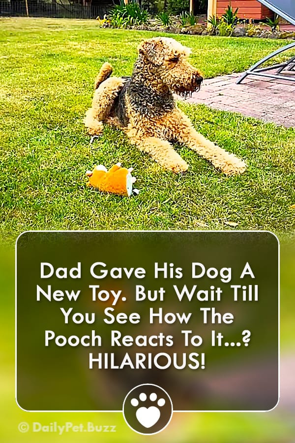 Dad Gave His Dog A New Toy. But Wait Till You See How The Pooch Reacts To It? HILARIOUS!