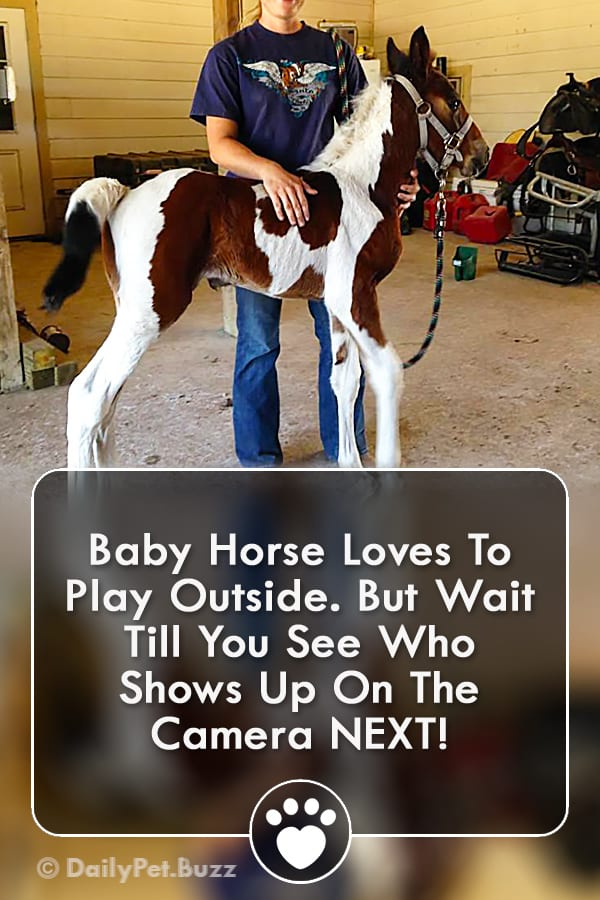 Baby Horse Loves To Play Outside. But Wait Till You See Who Shows Up On The Camera NEXT!