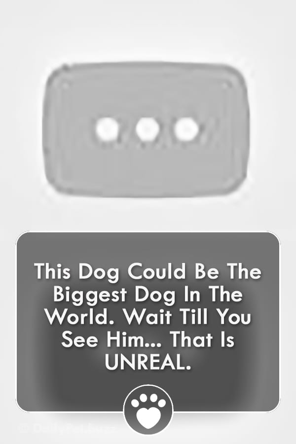 This Dog Could Be The Biggest Dog In The World. Wait Till You See Him... That Is UNREAL.