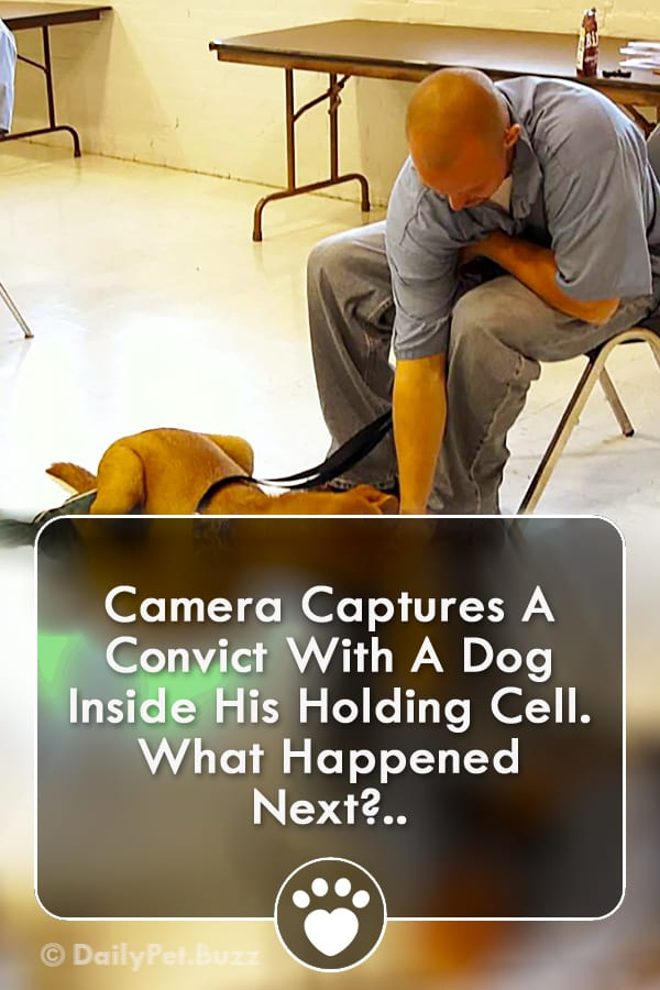 Camera Captures A Convict With A Dog Inside His Holding Cell. What Happened Next?..