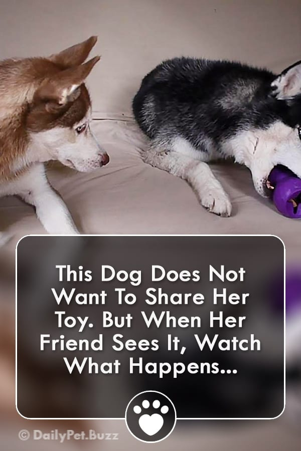 This Dog Does Not Want To Share Her Toy. But When Her Friend Sees It, Watch What Happens...