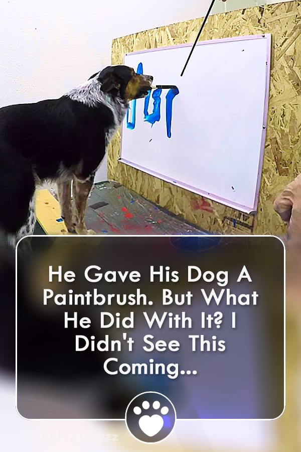 He Gave His Dog A Paintbrush. But What He Did With It? I Didn\'t See This Coming...