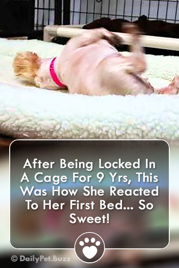 After Being Locked In A Cage For 9 Yrs, This Was How She Reacted To Her First Bed... So Sweet!