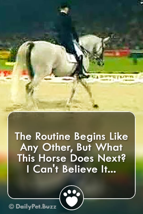The Routine Begins Like Any Other, But What This Horse Does Next? I Can\'t Believe It...