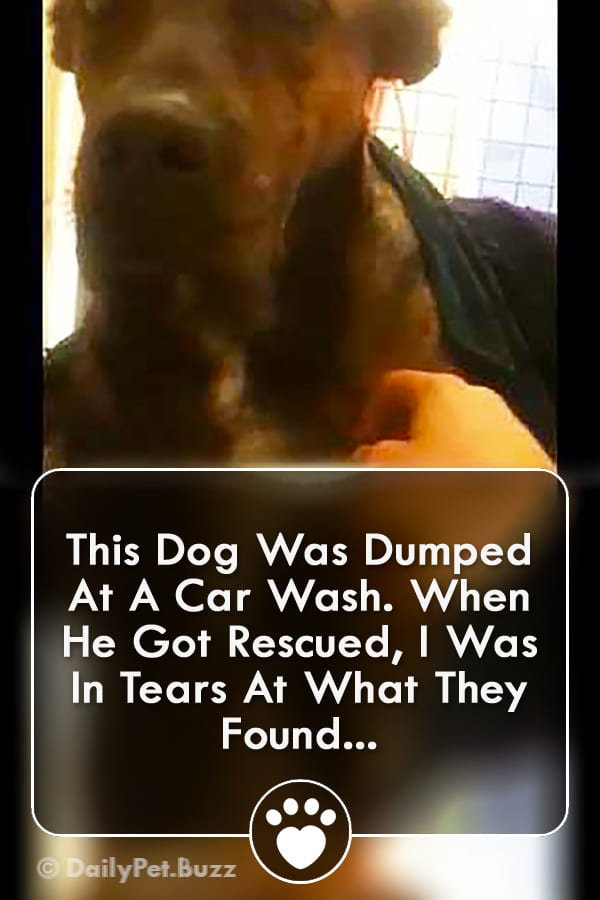 This Dog Was Dumped At A Car Wash. When He Got Rescued, I Was In Tears At What They Found...