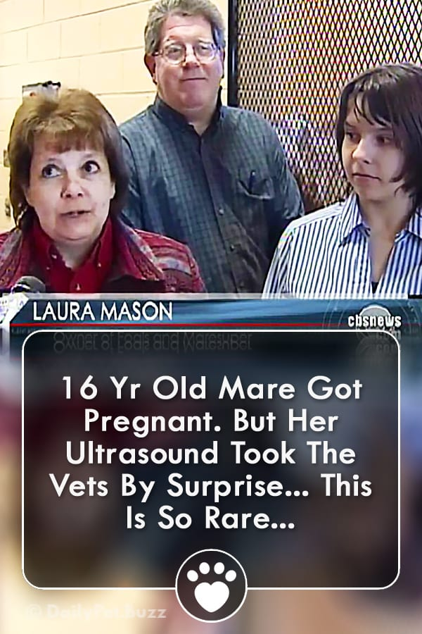 16 Yr Old Mare Got Pregnant. But Her Ultrasound Took The Vets By Surprise... This Is So Rare...