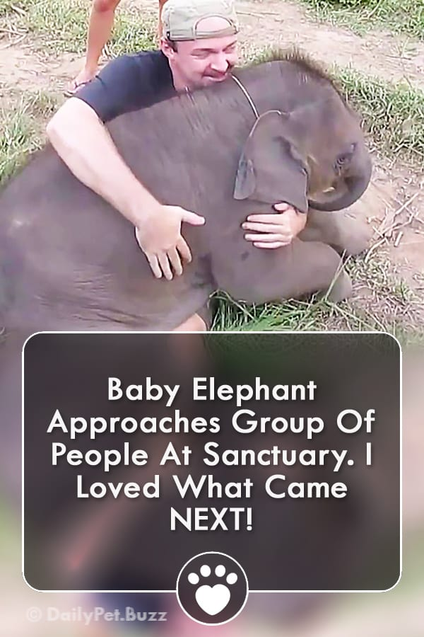 Baby Elephant Approaches Group Of People At Sanctuary. I Loved What Came NEXT!