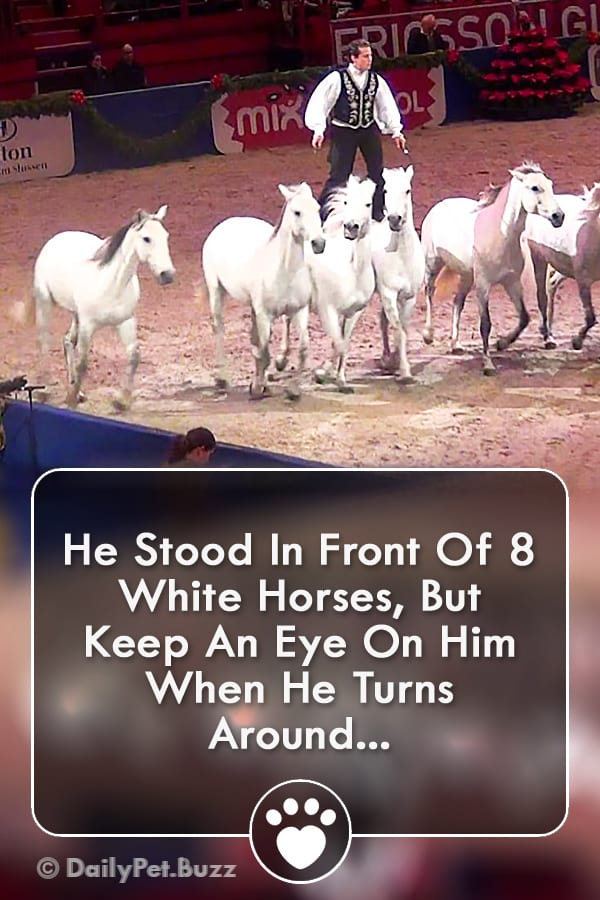 He Stood In Front Of 8 White Horses, But Keep An Eye On Him When He Turns Around...