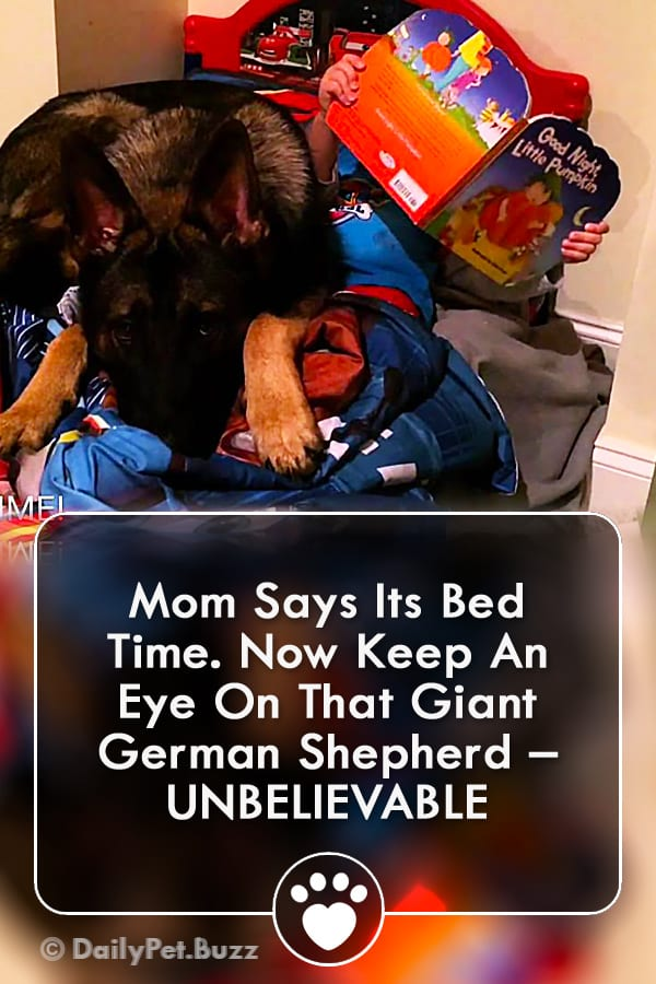 Mom Says Its Bed Time. Now Keep An Eye On That Giant German Shepherd – UNBELIEVABLE