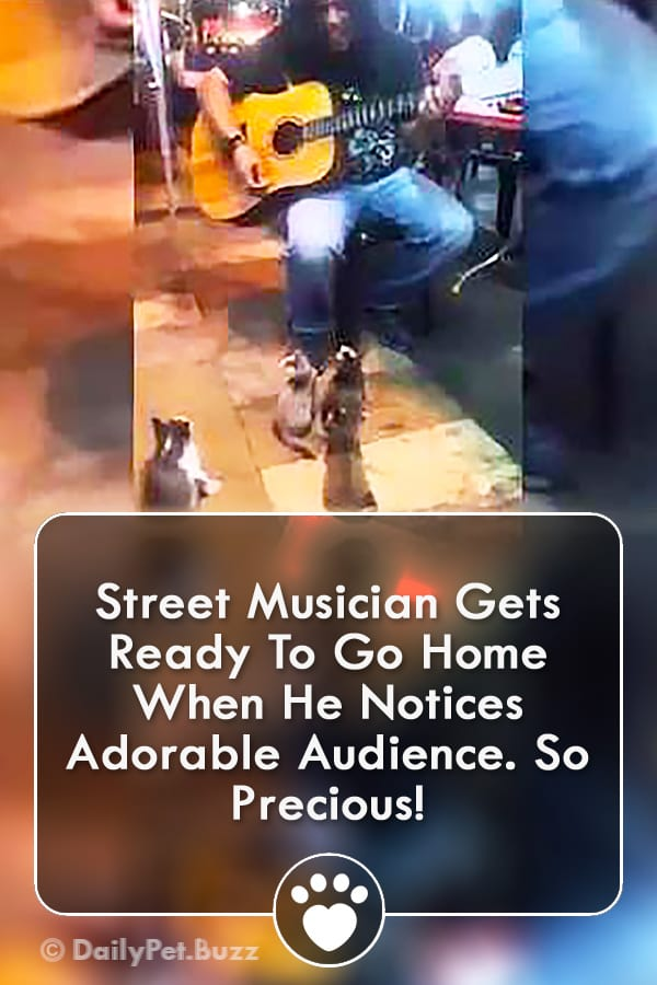 Street Musician Gets Ready To Go Home When He Notices Adorable Audience. So Precious!