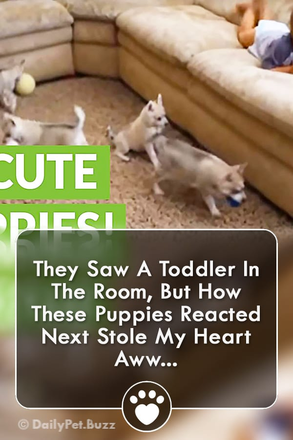 They Saw A Toddler In The Room, But How These Puppies Reacted Next Stole My Heart Aww...