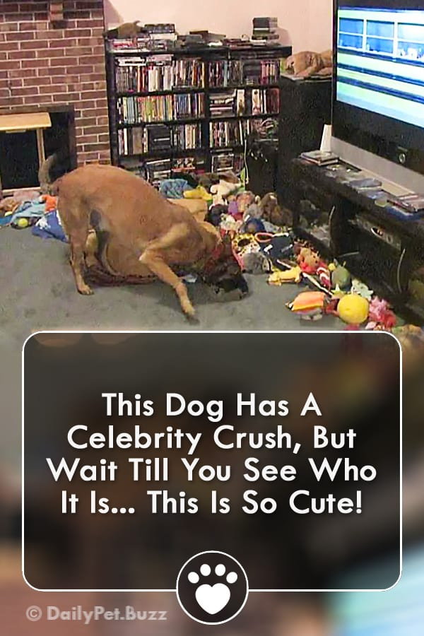 This Dog Has A Celebrity Crush, But Wait Till You See Who It Is... This Is So Cute!