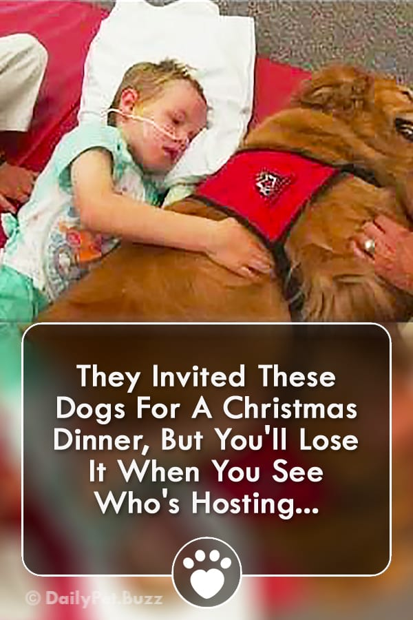 They Invited These Dogs For A Christmas Dinner, But You\'ll Lose It When You See Who\'s Hosting...