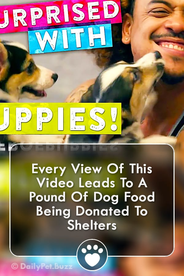 Every View Of This Video Leads To A Pound Of Dog Food Being Donated To Shelters