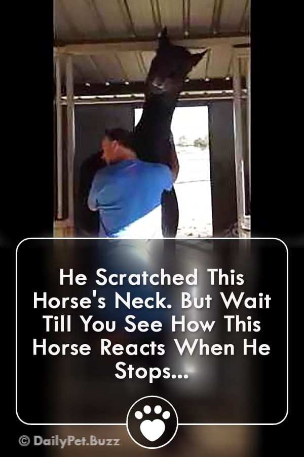 He Scratched This Horse\'s Neck. But Wait Till You See How This Horse Reacts When He Stops...