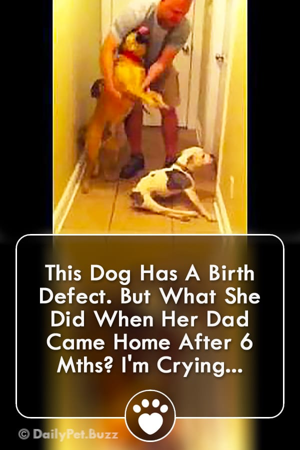 This Dog Has A Birth Defect. But What She Did When Her Dad Came Home After 6 Mths? I\'m Crying...