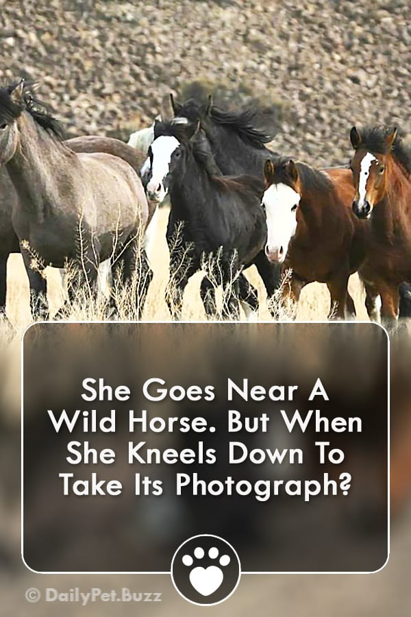 She Goes Near A Wild Horse. But When She Kneels Down To Take Its Photograph?