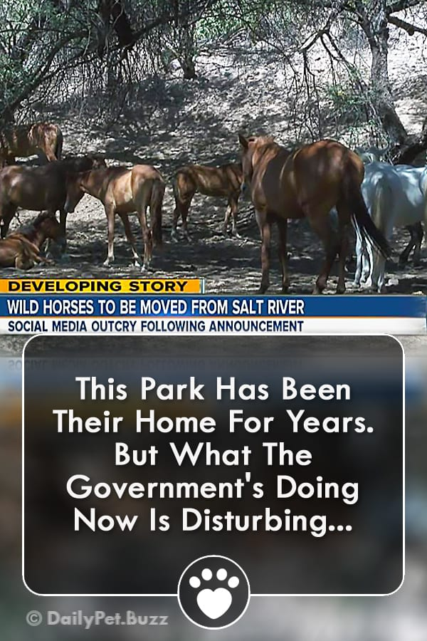 This Park Has Been Their Home For Years. But What The Government\'s Doing Now Is Disturbing...