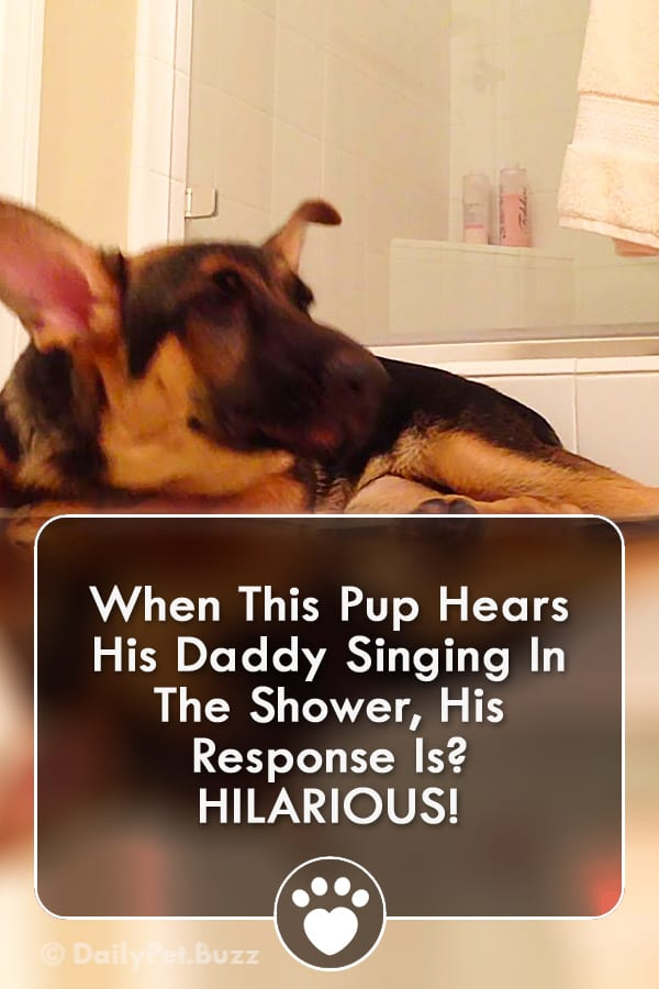 When This Pup Hears His Daddy Singing In The Shower, His Response Is? HILARIOUS!