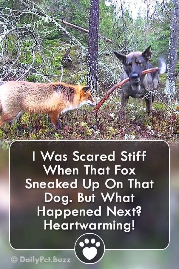 I Was Scared Stiff When That Fox Sneaked Up On That Dog. But What Happened Next? Heartwarming!
