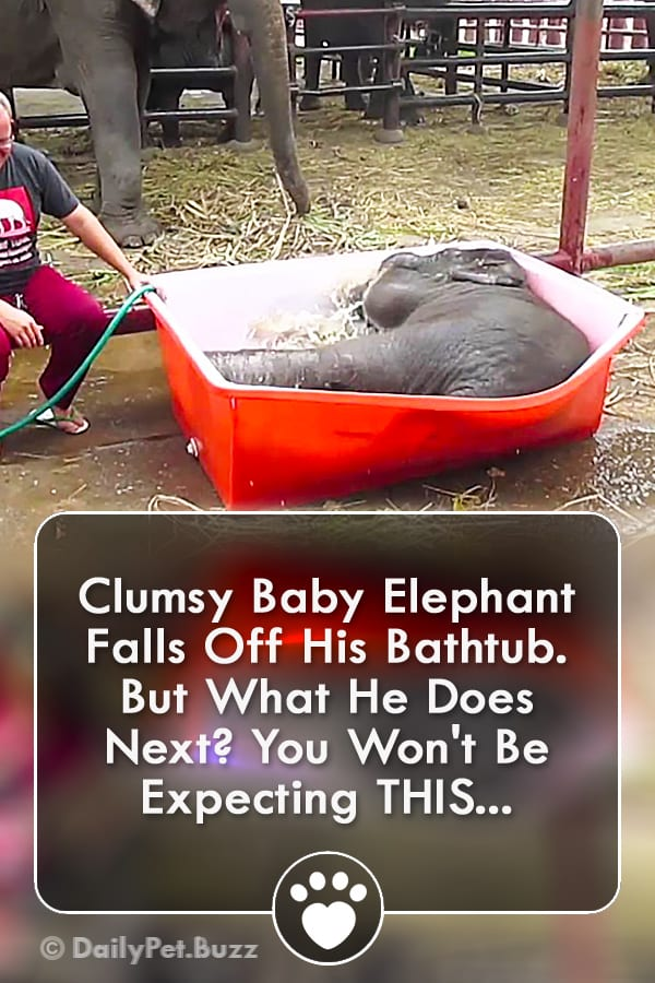 Clumsy Baby Elephant Falls Off His Bathtub. But What He Does Next? You Won\'t Be Expecting THIS...