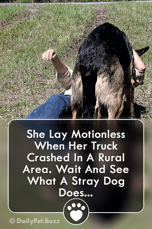 She Lay Motionless When Her Truck Crashed In A Rural Area. Wait And See What A Stray Dog Does...