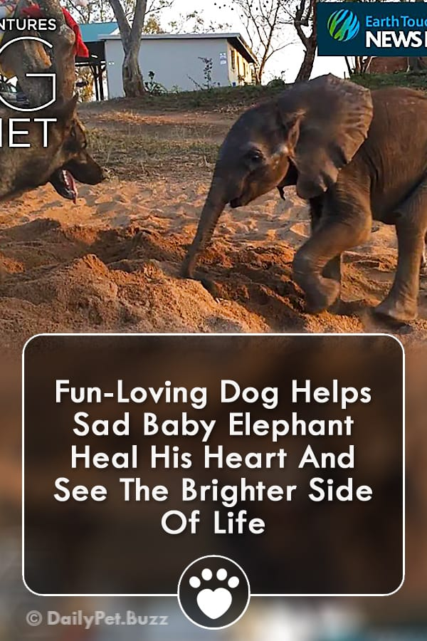 Fun-Loving Dog Helps Sad Baby Elephant Heal His Heart And See The Brighter Side Of Life