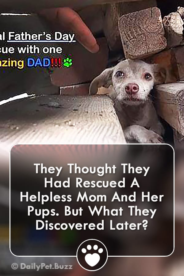 They Thought They Had Rescued A Helpless Mom And Her Pups. But What They Discovered Later?