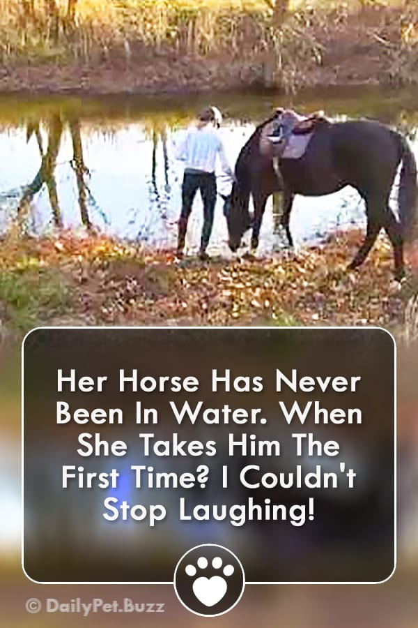 Her Horse Has Never Been In Water. When She Takes Him The First Time? I Couldn\'t Stop Laughing!