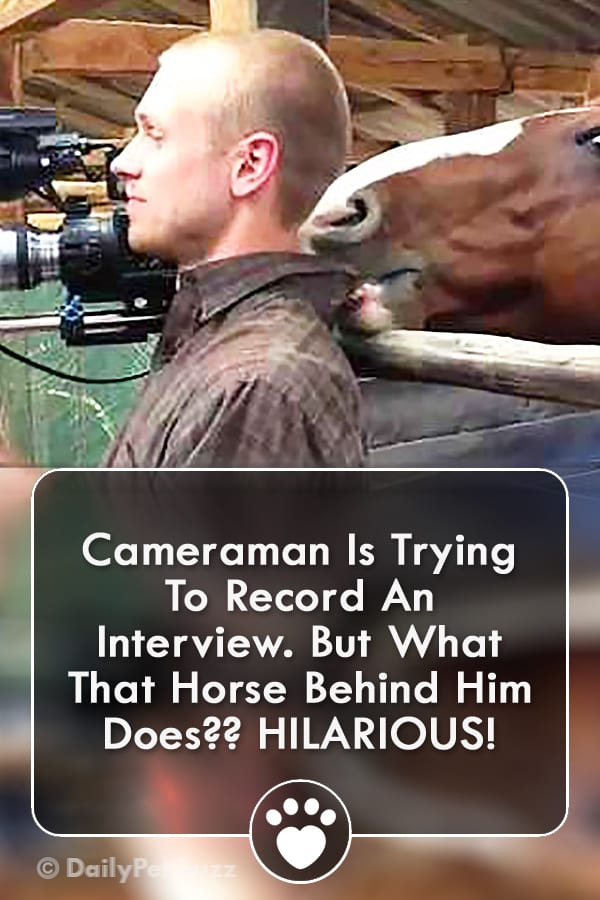 Cameraman Is Trying To Record An Interview. But What That Horse Behind Him Does?? HILARIOUS!
