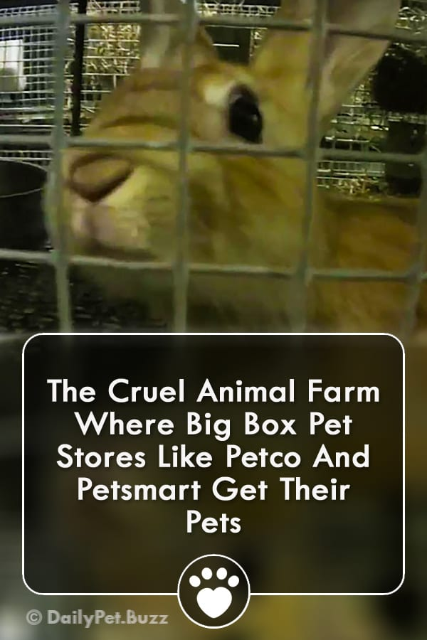 The Cruel Animal Farm Where Big Box Pet Stores Like Petco And Petsmart Get Their Pets
