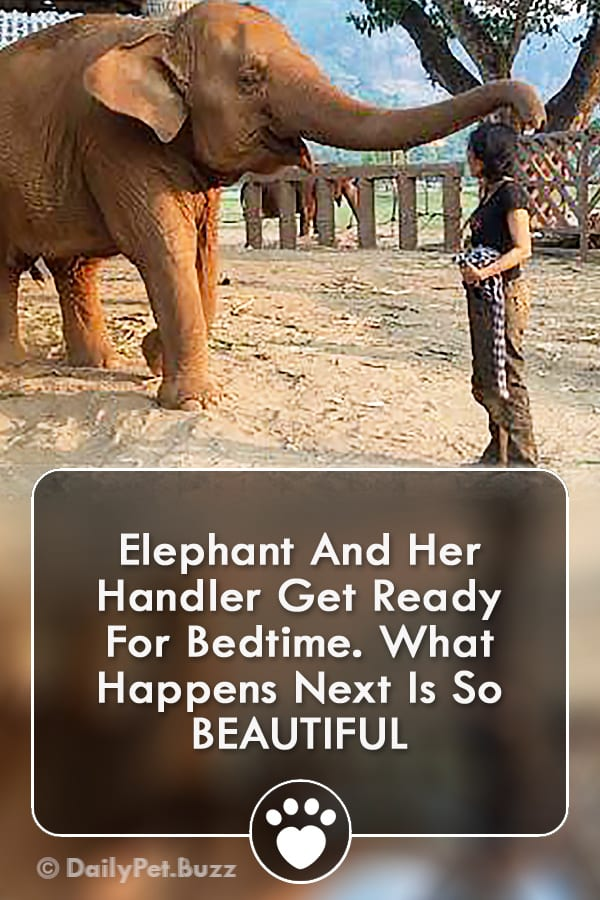 Elephant And Her Handler Get Ready For Bedtime. What Happens Next Is So BEAUTIFUL
