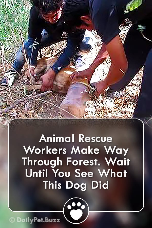 Animal Rescue Workers Make Way Through Forest. Wait Until You See What This Dog Did