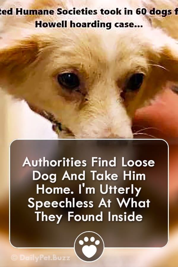 Authorities Find Loose Dog And Take Him Home. I\'m Utterly Speechless At What They Found Inside